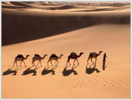 Morocco Camel Trekking.jpg